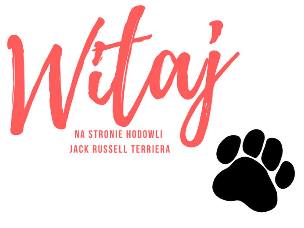 Hodowla Jack Russell Terrier kujawsko-pomorskie