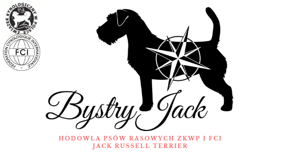 Bystry Jack FCI